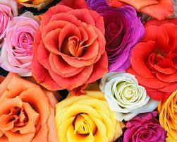 Flower Pictures Flowers Love Blooms Roses Bunch Of Flowers Free Desktop