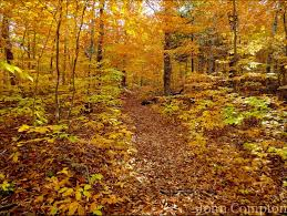 weekend foliage planner england fall trips england today