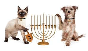 cat menorah dog and cat hanukkah celebration stock photo image of play