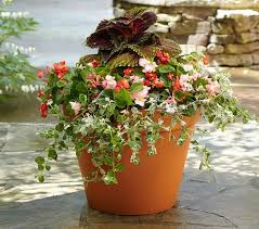 Design Flower Pots Timeless Terracotta Flower Pots Wearefound Home Design