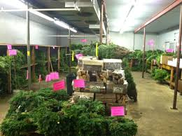 Wreaths Wholesale Wholesale Wreaths And Greens Availability Metropolitan Wholesale