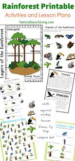 printable animal activities the best rainforest printable activities for kids rainforest theme