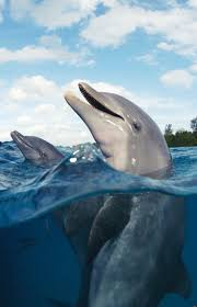 306 best dolphins images on pinterest ocean life animals and