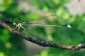 dragonfly and butterfly pictures free stock photos 803