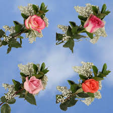 global roses tell your you with roses global flower