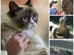 Tard The Cat Meme - grumpy cat wins copyright lawsuit