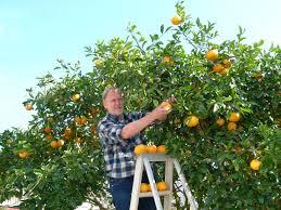 pick fruit