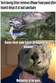 Otter Meme - otter memes best collection of funny otter pictures