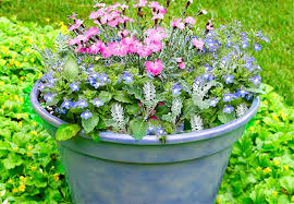 Potted Plants For Patio 12 Container Garden Combos
