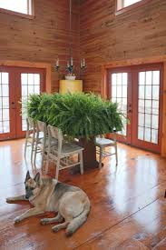 is home depot open thanksgiving day 2014 5 boston ferns creative cain cabin