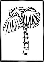 coloring pictures of a palm tree tree coloring pages