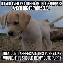 Cute Puppies Meme - 25 best memes about cute puppy cute puppy memes