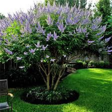 flowering trees for sale nature nursery