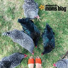 what the cluck why we love our backyard chickens