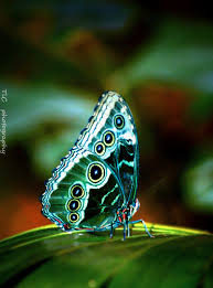 Beautiful Images Most Beautiful Butterfly Wings