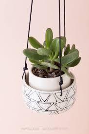 38 best succulents images on pinterest succulent plants