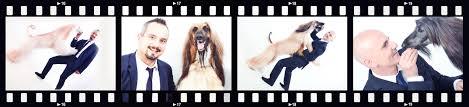 us afghan hound prestigious kennel afghan hound