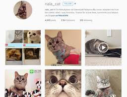 Cat Instagram 11 Cutest Instagram Accounts For Cat Lovers The Jodi Logik Blog