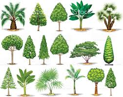 different types of green trees stock vector art 675817828 istock