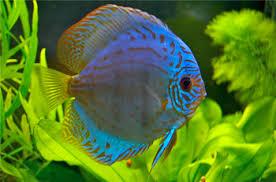 pictures of aquarium fishes and their names 1000 aquarium ideas