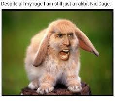 Nic Cage Meme - despite all my rage i am still just a rabbit nic cage meme on me me