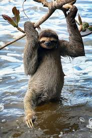 Sexy Sloth Meme - ok now strike a sexy pose imgur