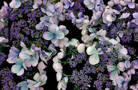 free images nature blossom flower purple petal bloom