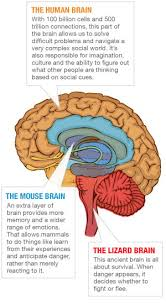 What Portion Of The Brain Controls Respiration From Primitive Parts A Highly Evolved Human Brain Npr
