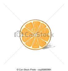 vector of orange half cut circle citrus fruit color sketch draw