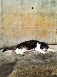 Haus Kaufen S Katzen Bilder Free Katze Friday S E Hasen Und Panda S Sã ãÿe Baby