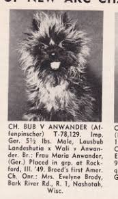 affenpinscher in texas the affenpinscher u2013 a historical perspective canine chronicle