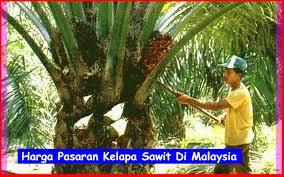 harga pasaran kelapa sawit di malaysia kelapasawitnews