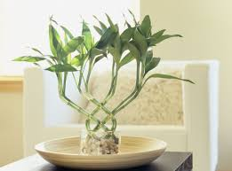 White Bedroom Plants Decorating Bedroom With Plants Air Purifying Indoor Names That