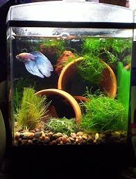 Aquascape Fish 25 Best Fish Tank Images On Pinterest Plants Aquarium Ideas And