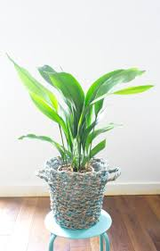 easy indoor plants 100 easy indoor plants 29 best indoor garden images on