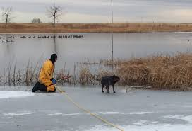 halloween city littleton co two more dogs rescued after falling through ice in lone tree and
