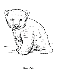 hibernating bear coloring pages free polar bears book teddy cubs