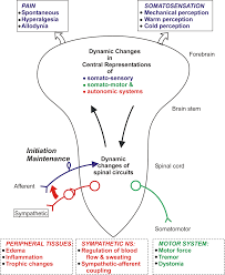 Nervous System Concept Map Research Interests U2014 English