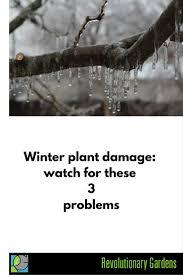 winter plant damage watch for these 3 problems revolutionary
