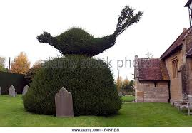 Yew Topiary - topiary of yew stock photos u0026 topiary of yew stock images alamy