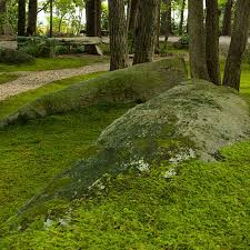 plant a moss lawn southern living