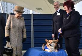 queen elizabeth dog queen elizabeth s last corgi willow died and people are sad time