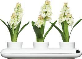Kitchen Herb Pots Amazon Com Sagaform 5015274 Stoneware Herb Pot Trio White