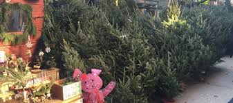 how to buy a christmas tree in new york city mommy nearest