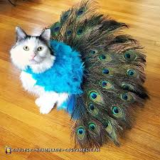 pretty peacock cat costume literally tells it s own