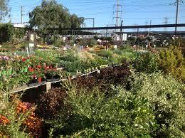 Landscape Nurseries Near Me by Landscape Center Huntington Beach Landscape Center