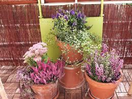 herbstbepflanzung balkon kein balkon ist auch keine lösung