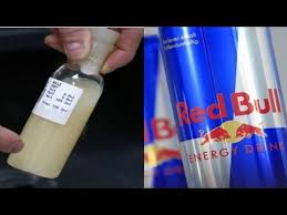 Side Effects Of Bull Energy Shocking Fact Your Energy Drinks Contain Bull Urine And