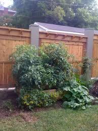 peacescapes urban vegetable garden