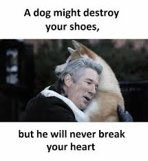 Shoes Meme - dopl3r com memes a dog might destroy your shoes but he will